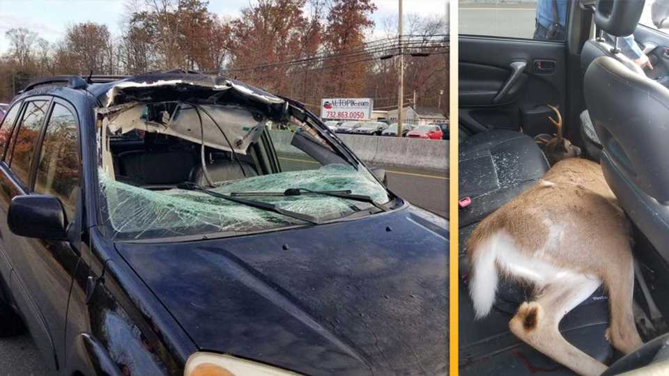 Driver Cheats Death After Deer Flies Through Windshield, Lands in Backseat