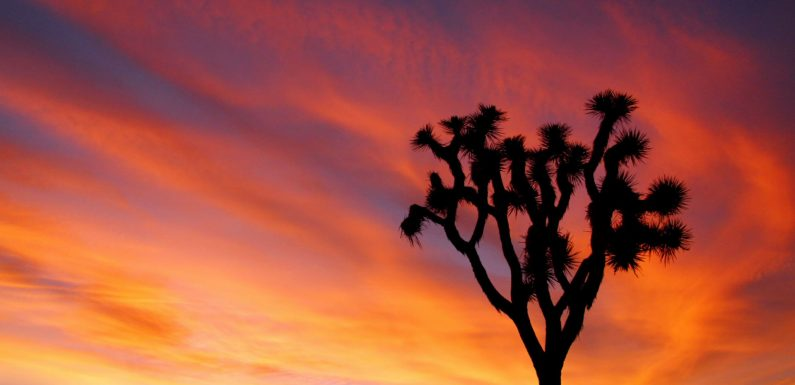 Off-Roaders Vandalize Joshua Tree National Park During Federal Government Shutdown