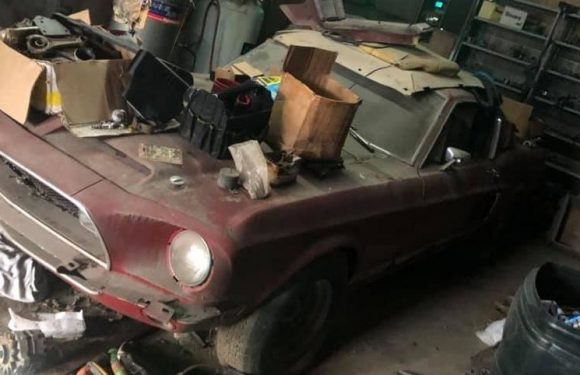 This Abandoned 1968 Mustang Shelby GT500 Is One Serious Barn Find