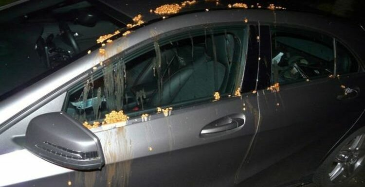 'Idiotic': Cars targeted by pranksters as beans poured over vehicles in bizarre trend